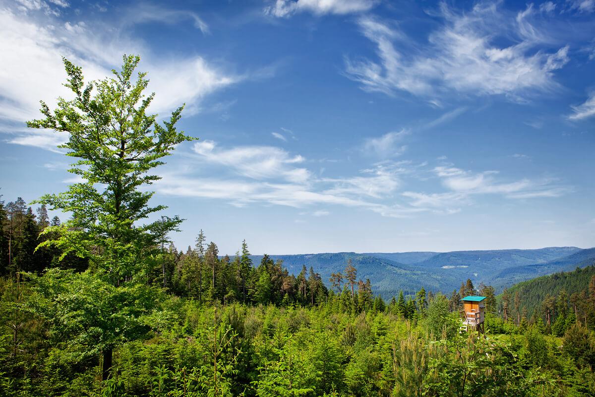 Landschaft im Schwarzwald zur Sommerzeit - Hotel Konradshof