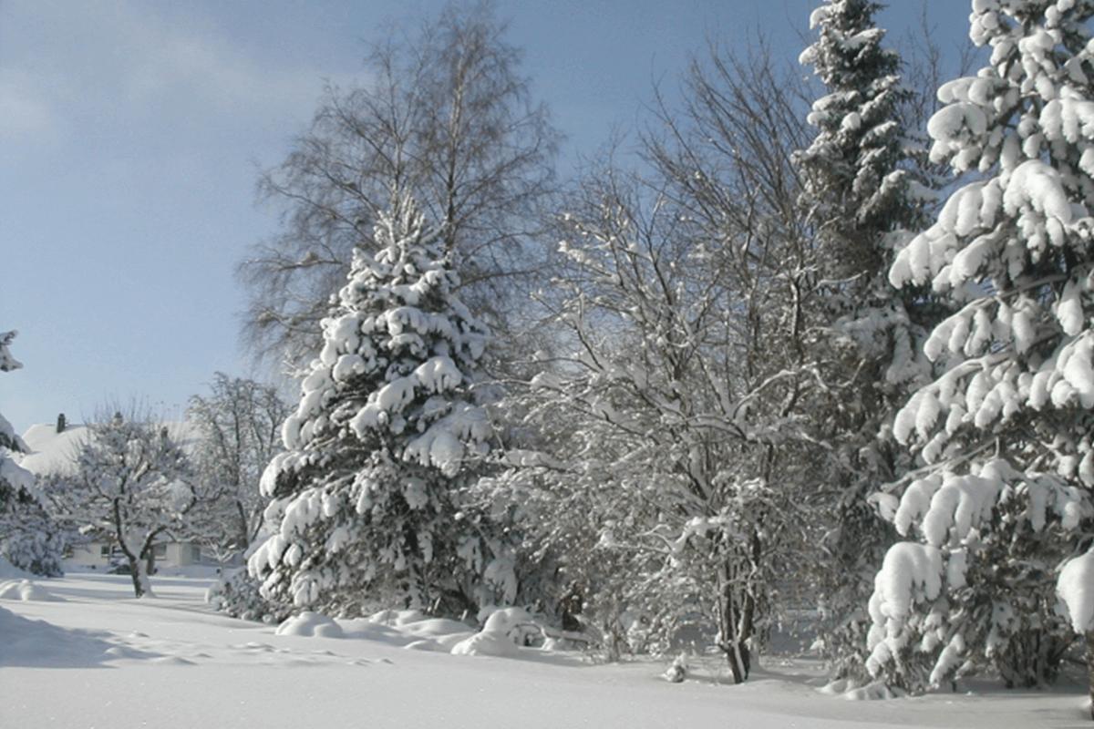 Verschneite Winterlandschaft im Schwarzwald - Hotel Konradshof