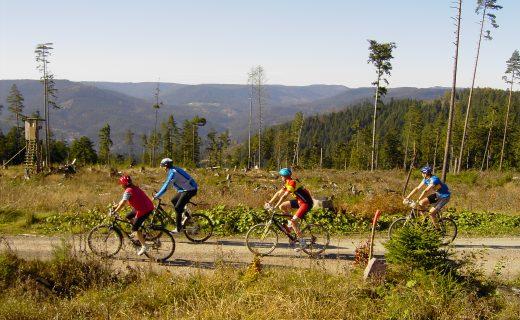 Biker im Nordschwarzwald