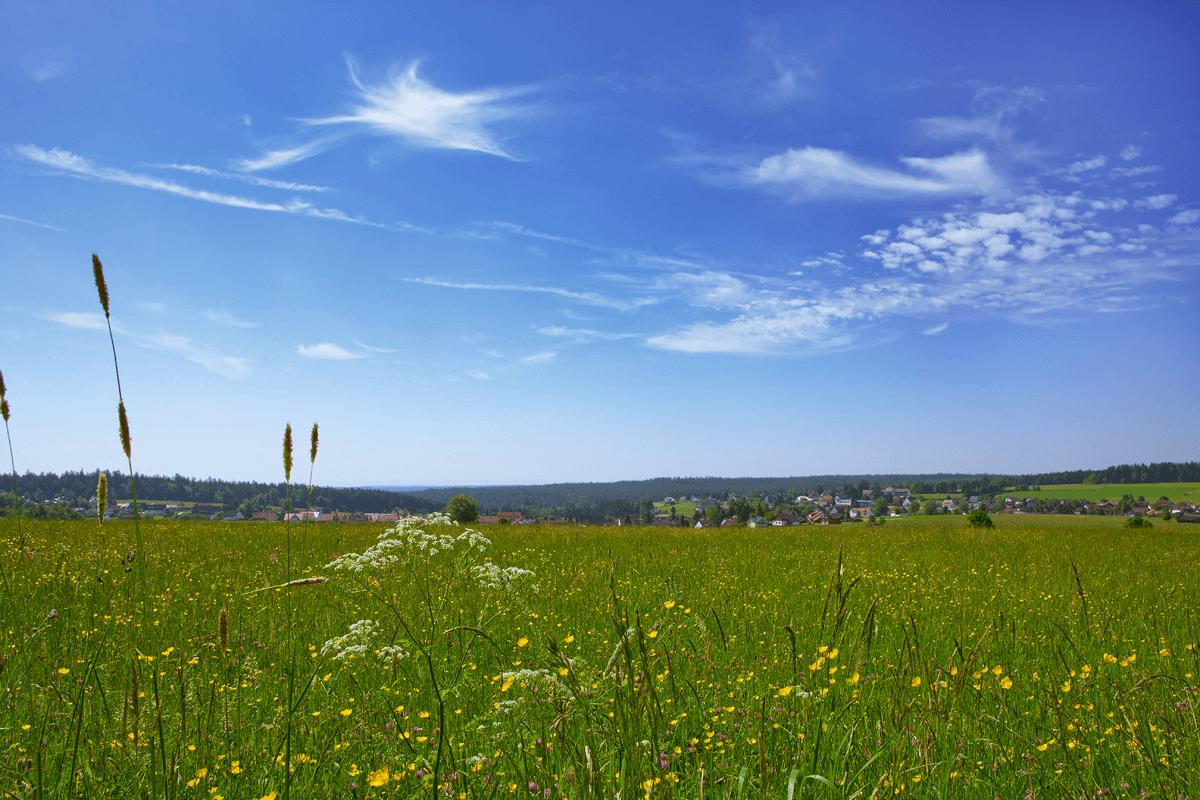 Wiese mit Stadt im Hintergrund zur Sommerzeit - Hotel Konradshof
