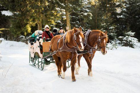 hotel-konradshof-pferdeschlittenfahrt-winter-schwarzwald